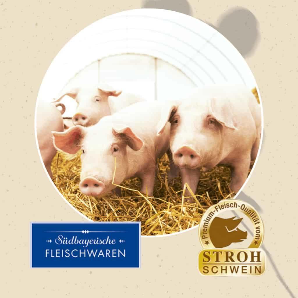 Das Bayrische Strohschwein